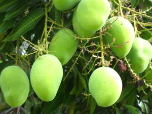 mango2102201171839PM[1]