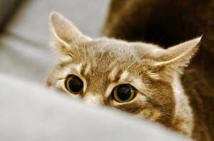 Stalking cat 2
