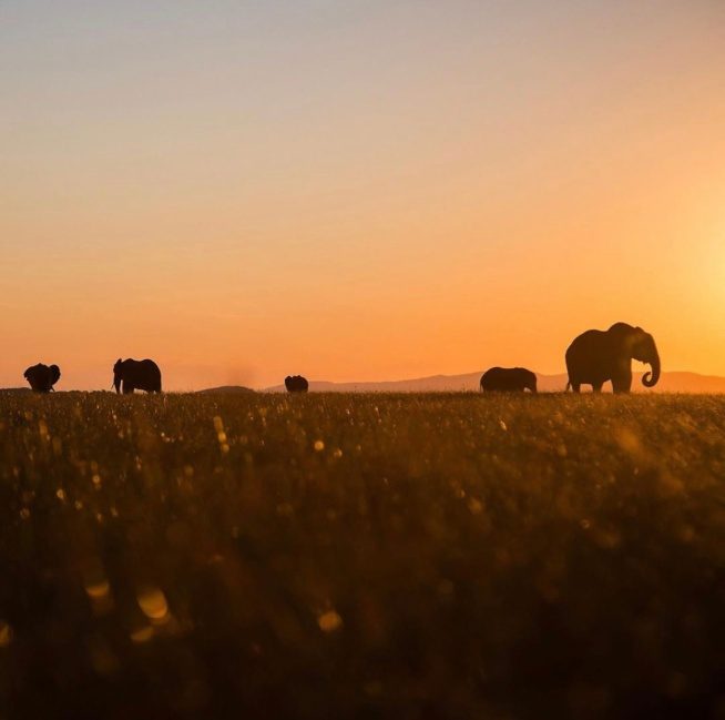 Sun setting on the elephants at Bumi Hills, Zimbabwe