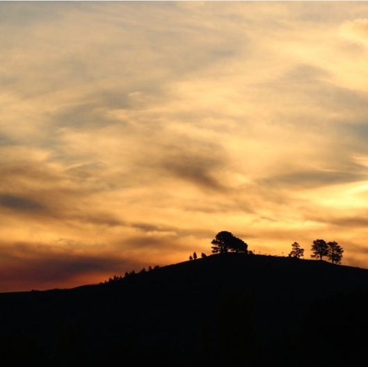 Sunset silhouettes at the National Arboretum Canberra